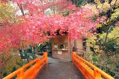 Hoja de arce de la caída en Japón imagenes de archivo