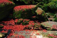 Hoja de arce roja durante caída Imagenes de archivo
