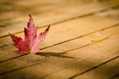 Hoja de arce roja en la madera Foto de archivo libre de regalías