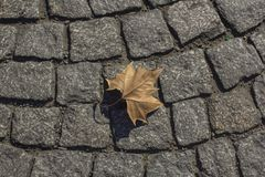 Hoja de arce seca en el pavimento en París foto de archivo