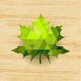 Hoja de arce verde Imagen de archivo libre de regalías