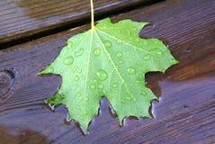 Hoja de arce verde caida en cubierta de madera en charco de la lluvia Fotos de archivo libres de regalías