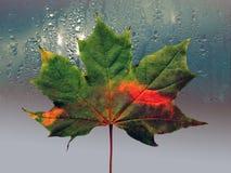 Hoja de arce verde con el dibujo del otoño Foto de archivo libre de regalías