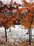 hoja de arce y nieve fotos de archivo libres de regalías