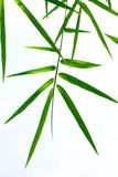 Hoja de bambú Fotos de archivo libres de regalías
