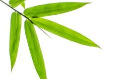 Hoja de bambú fotos de archivo
