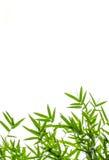 Hoja de bambú foto de archivo libre de regalías
