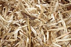 Hoja de bambú seca en la tierra fotografía de archivo