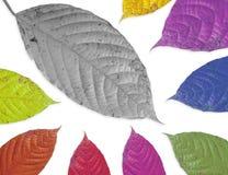 Hoja de Colorfull aislada foto de archivo libre de regalías