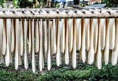 hoja de goma del árbol de goma Imagen de archivo libre de regalías