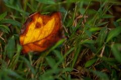 Hoja de la caída en hierba verde imagen de archivo