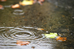 Hoja de la caída en la tierra después de la lluvia Fotos de archivo libres de regalías