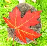 Hoja de la caída en un polo de madera imagenes de archivo