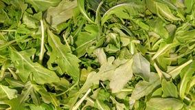 Hoja de la ensalada del Arugula en bulto imagen de archivo