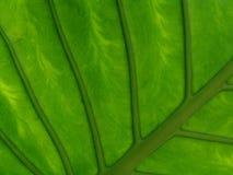 Hoja de la flor Fotografía de archivo libre de regalías