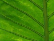 Hoja de la flor Imagen de archivo