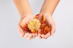 Hoja de la flor en manos Foto de archivo libre de regalías