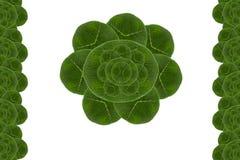Hoja de la forma de la flor Imagen de archivo libre de regalías