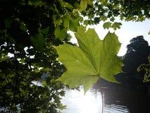 Hoja de la fotosíntesis imagen de archivo libre de regalías