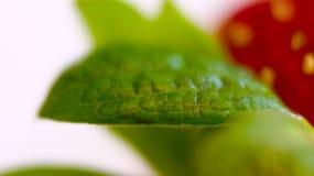Hoja de la fresa Fotos de archivo libres de regalías