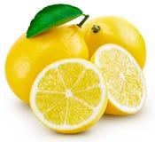 Hoja de la fruta del limón imagen de archivo