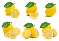 Hoja de la fruta del limón imagen de archivo libre de regalías