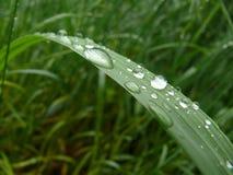 hoja de la hierba Fotos de archivo
