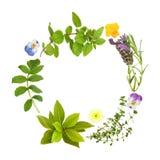 Hoja de la hierba y guirnalda floral Imagen de archivo libre de regalías