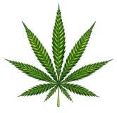 Hoja de la marijuana aislada