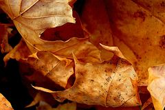 Hoja de la naranja del otoño Imagen de archivo