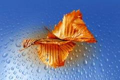 Hoja de la naranja del otoño Foto de archivo