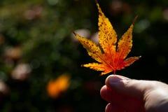 Hoja de la naranja del otoño Fotografía de archivo
