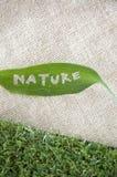 Hoja de la naturaleza en harpillera Fotografía de archivo