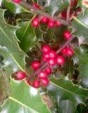 Hoja de la Navidad Foto de archivo libre de regalías