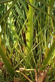 Hoja de la palma tropical Fotografía de archivo
