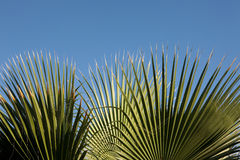 Hoja de la palmera Foto de archivo
