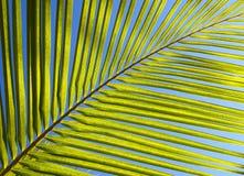 Hoja de la palmera Foto de archivo libre de regalías