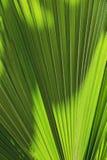 Hoja de la palmera Imagen de archivo libre de regalías