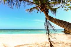 Hoja de la palmera, oscilación en una playa Imagen de archivo