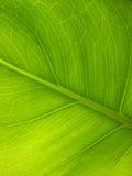 Hoja de la planta Foto de archivo libre de regalías