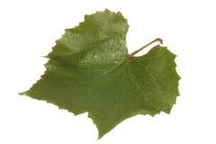 Hoja de la uva Fotos de archivo
