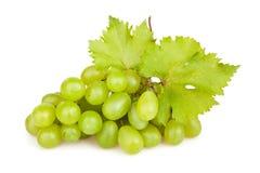 Hoja de las uvas blancas fotografía de archivo libre de regalías