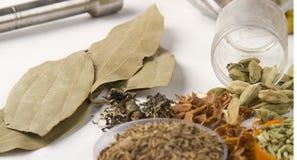 Hoja de laurel india de la especia con los cardamomos Foto de archivo