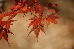 Hoja de octubre Fotos de archivo