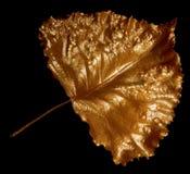 Hoja de oro Foto de archivo libre de regalías