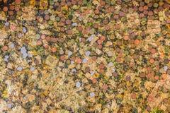 Hoja de oro con el fondo de las monedas. imagen de archivo