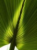 Hoja de palma Foto de archivo libre de regalías