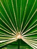 Hoja de palma Imagen de archivo