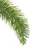 Hoja de palma aislada en blanco Imagen de archivo