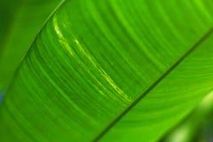 Hoja de palma brillante verde, fondo respetuoso del medio ambiente natural y textura imágenes de archivo libres de regalías